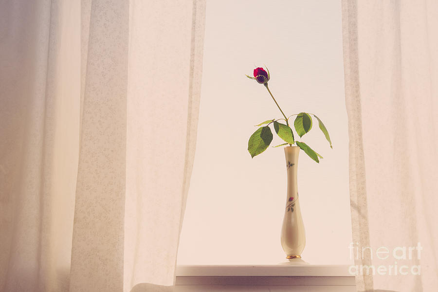 Rose Photograph - Rose In The Window by Diane Diederich