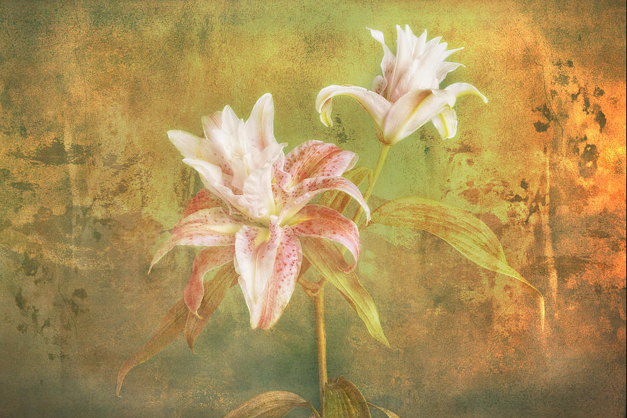 Rose Lily Silk by Bob Coates
