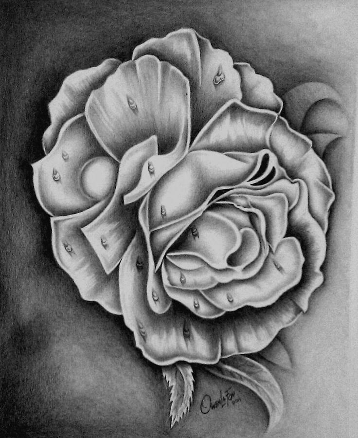 Rose Drawing - Rose by Owen Lafon