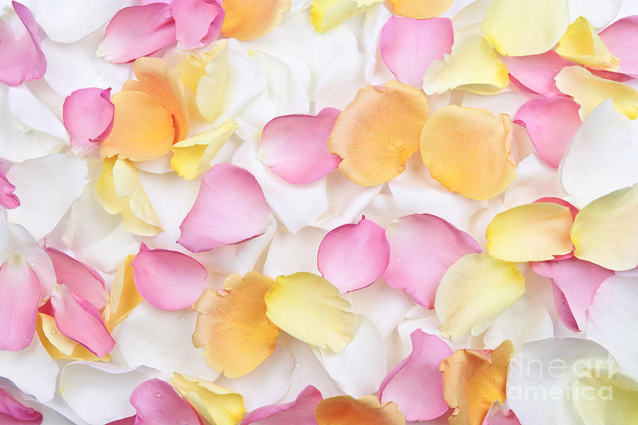 Petals Photograph - Rose Petals Background by Elena Elisseeva