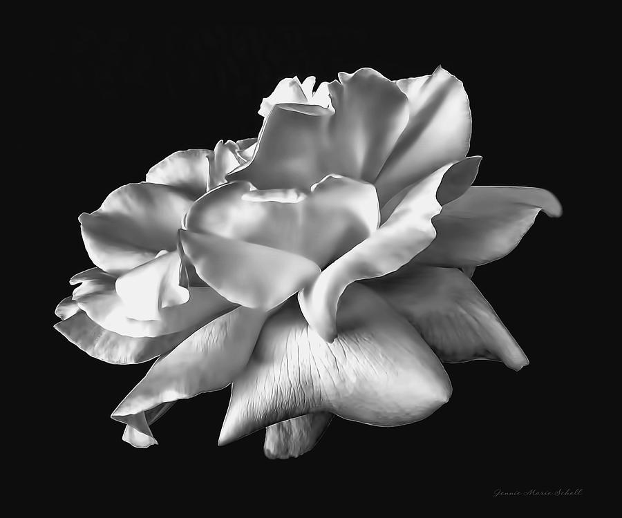 Rose petals in black and white photograph by jennie marie schell rose photograph rose petals in black and white by jennie marie schell mightylinksfo