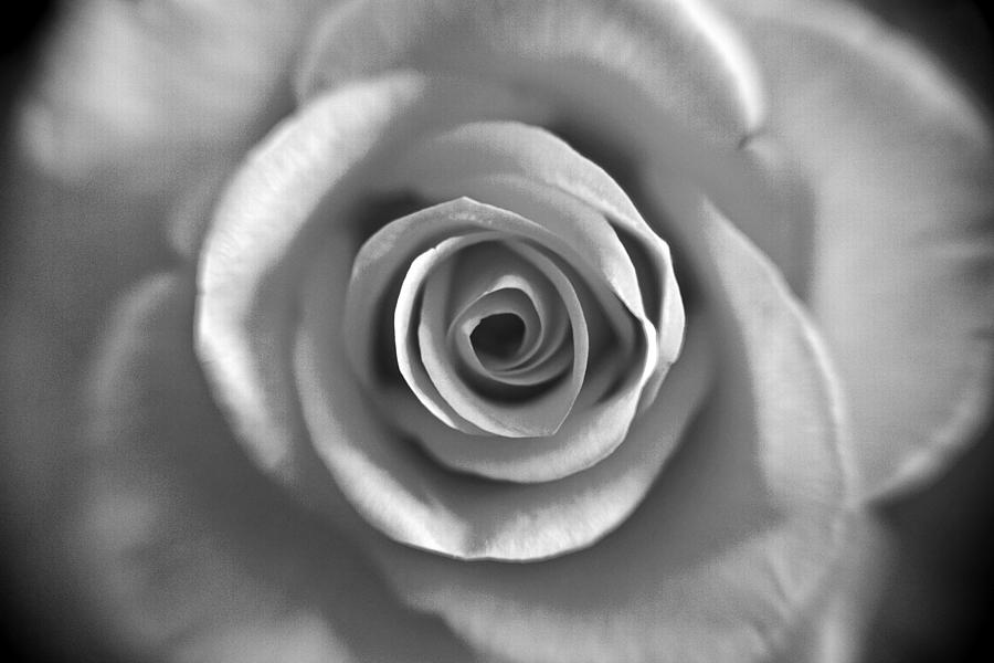 Rose Photograph - Rose Spiral 4 by Kim Lagerhem
