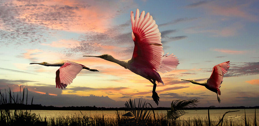 Wildlife Digital Art - Roseate Spoonbills Of Lake Tarpon by M Spadecaller