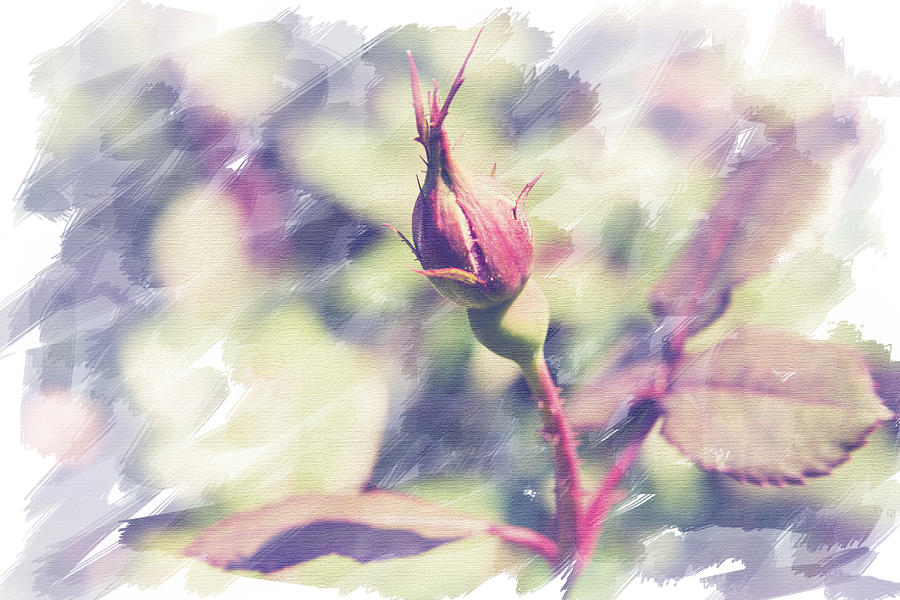 Rose Photograph - Rosebud by Eric Ziegler