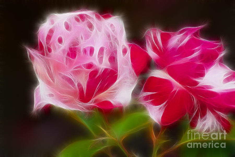 Flower Photograph - Roses 6221-fractal by Gary Gingrich Galleries