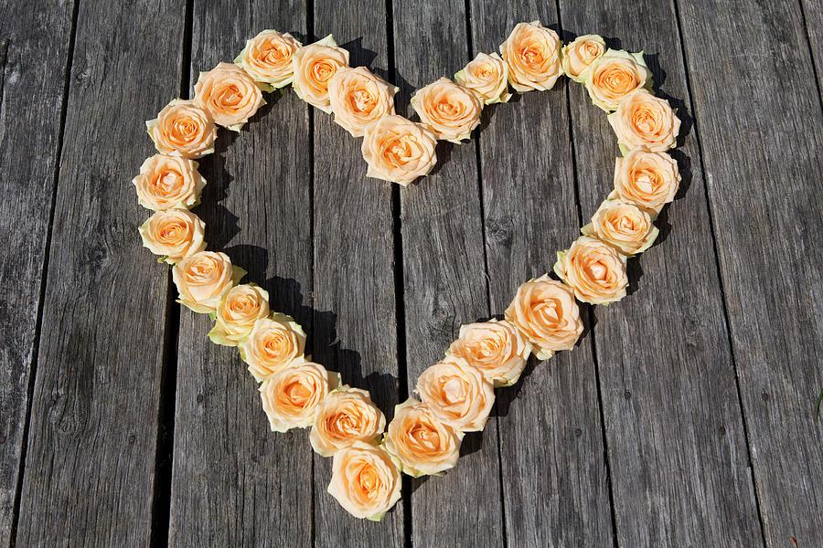 Roses Arranged In Heart Shape Photograph by Judith Haeusler