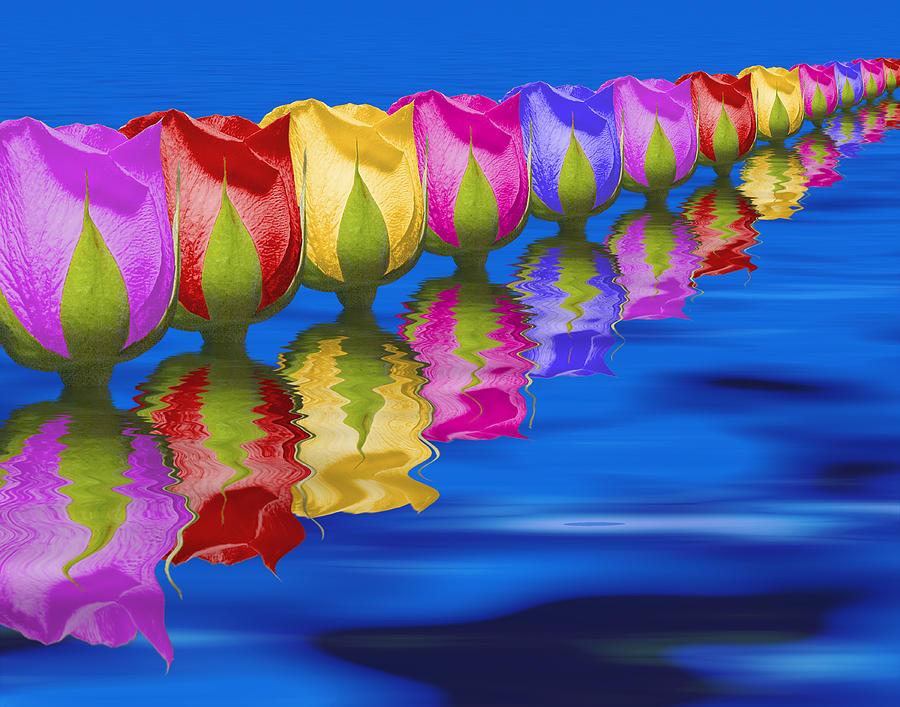 Roses Photograph - Roses Floating by Tom Mc Nemar