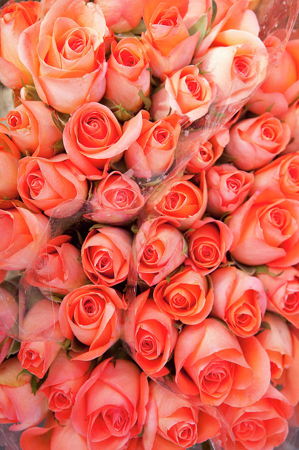 Roses For Sale In A Florist Photograph by Owen Franken