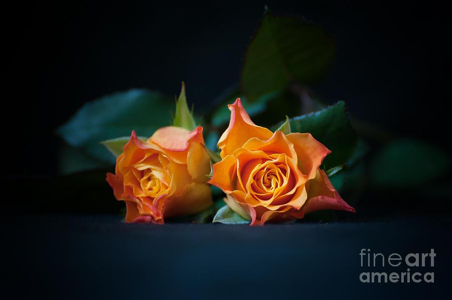 Roses Photograph - Roses by Jaroslaw Oleksyk