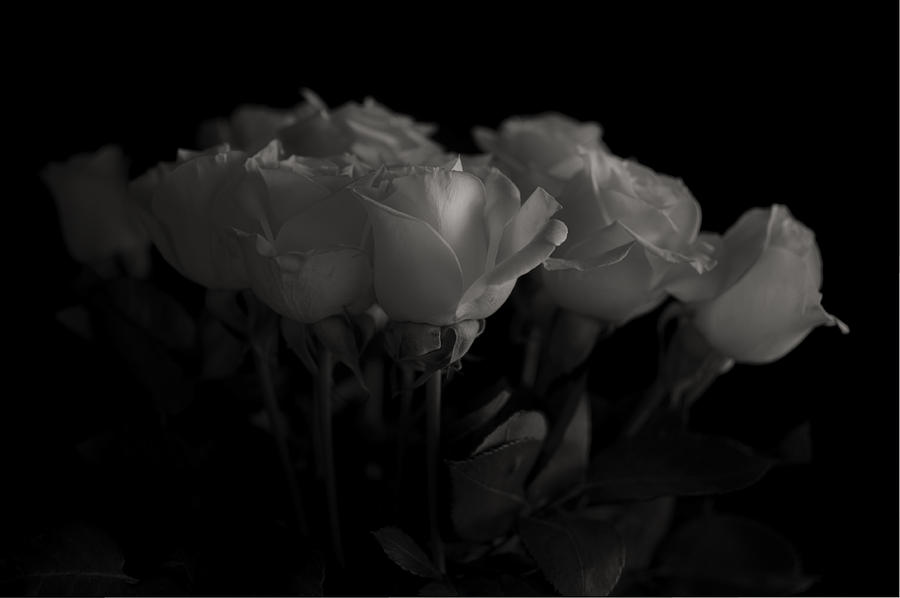 B&w Photograph - Roses by Mario Celzner
