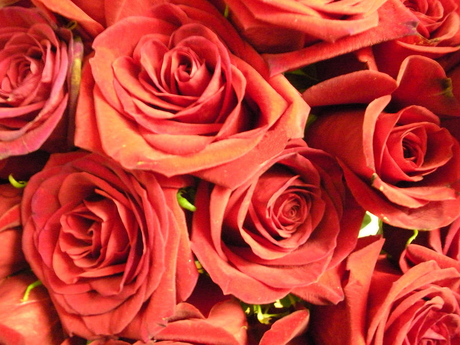 Roses On Your Wall Photograph