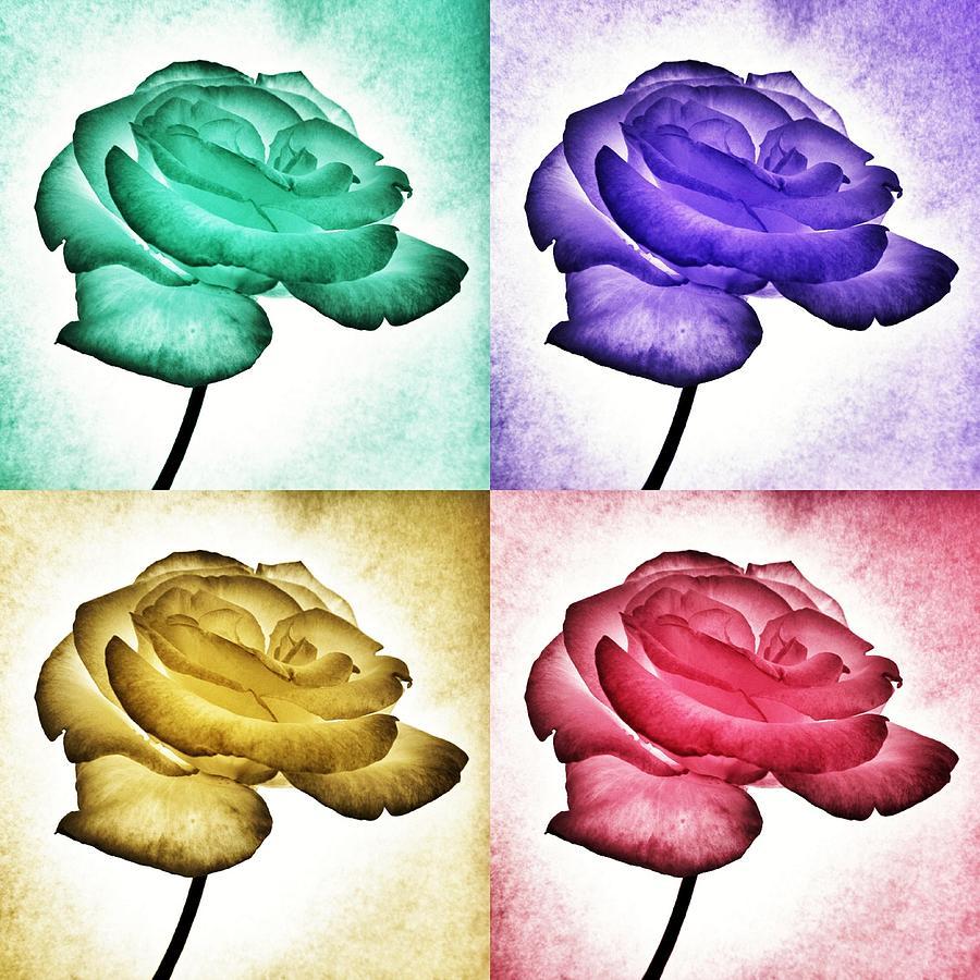 Roses - Pop Art Photograph