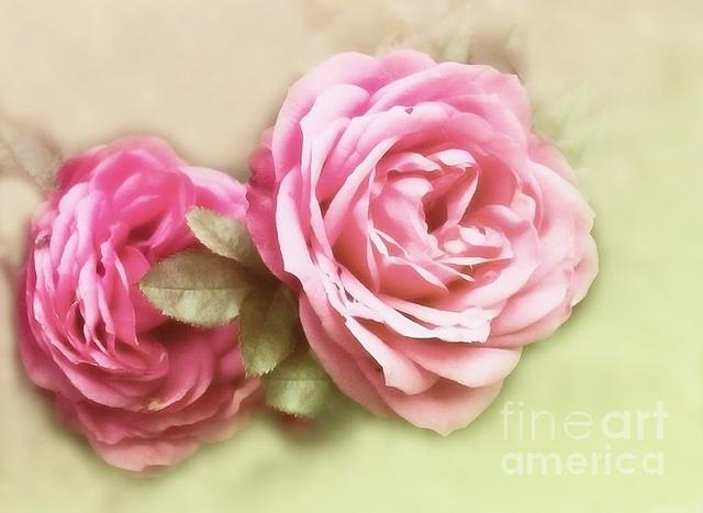 Roses Photograph - Roses by Sylvia  Niklasson