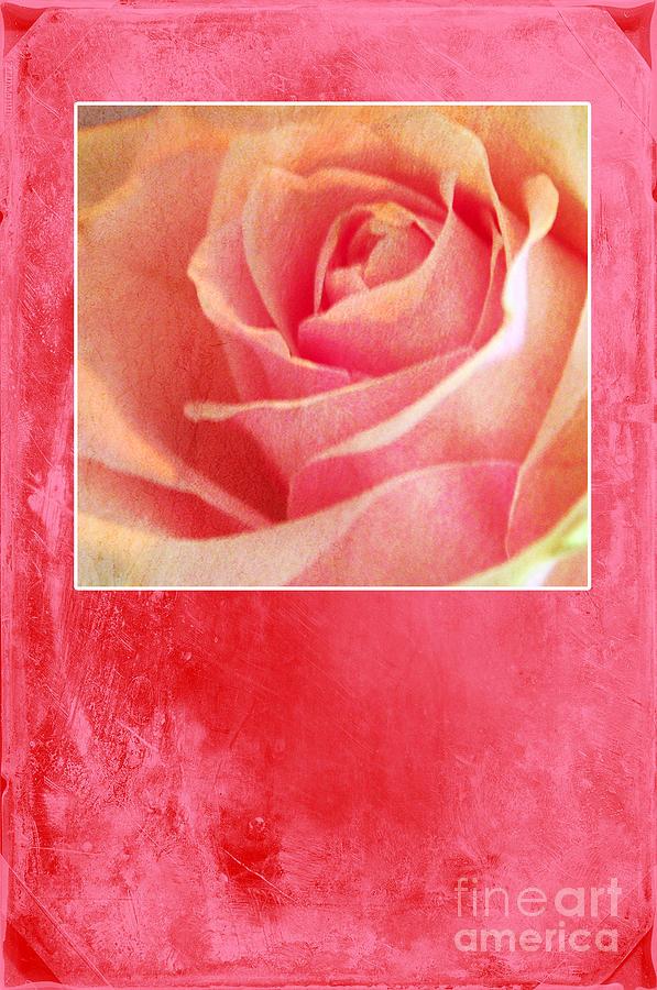 Greeting Card Photograph - Rosy by Randi Grace Nilsberg