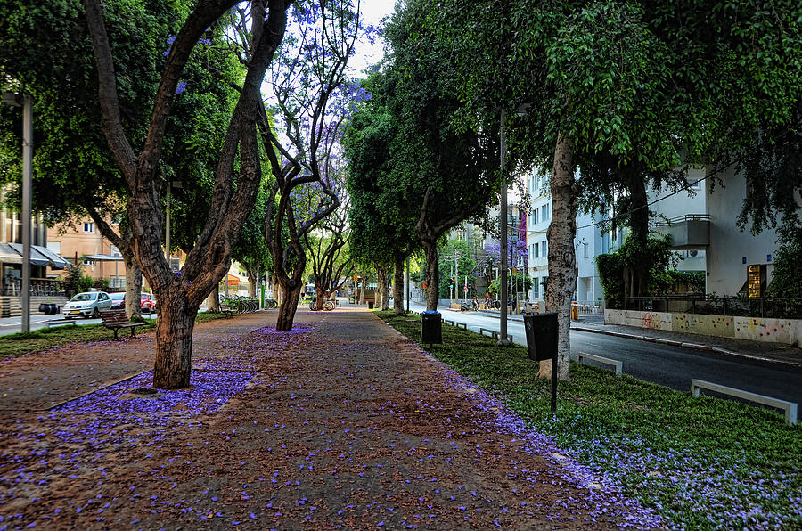 Foliage Photograph - Rothschild Boulevard by Ron Shoshani