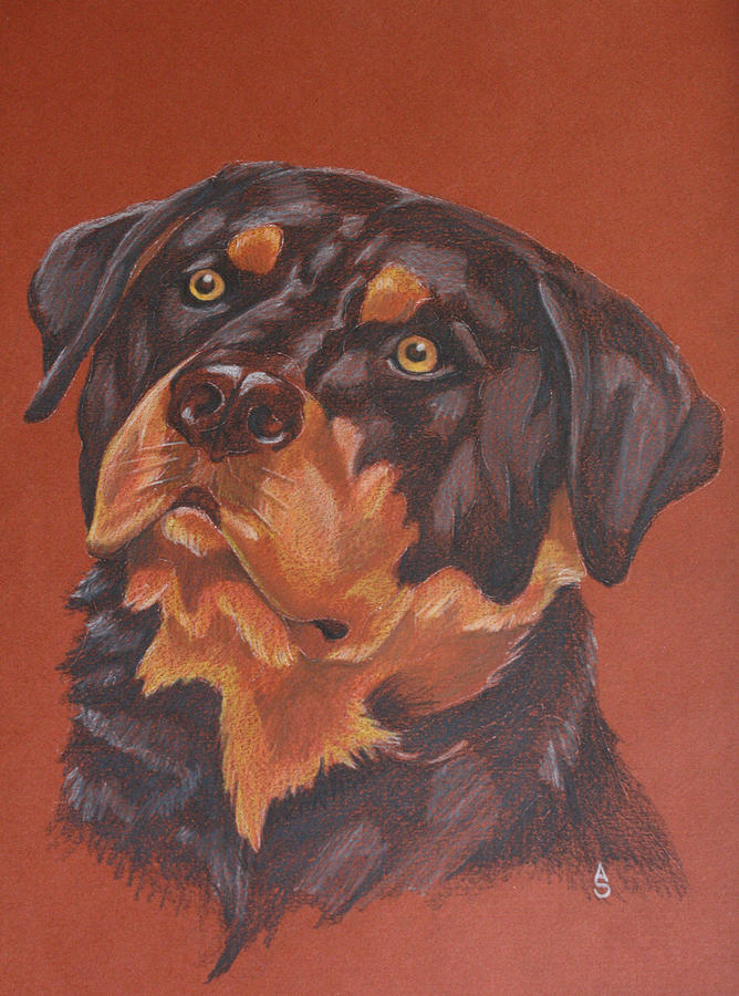 Rottweiler Drawing By Anastasia Smith