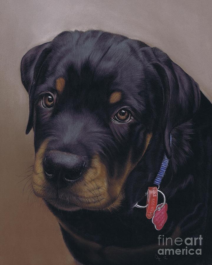 Dog Pastel - Rottweiler Dog by Karie-Ann Cooper