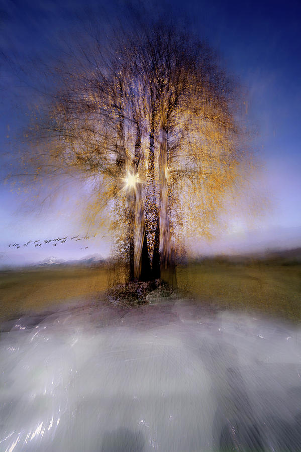 Blur Photograph - Round by Milan Malovrh