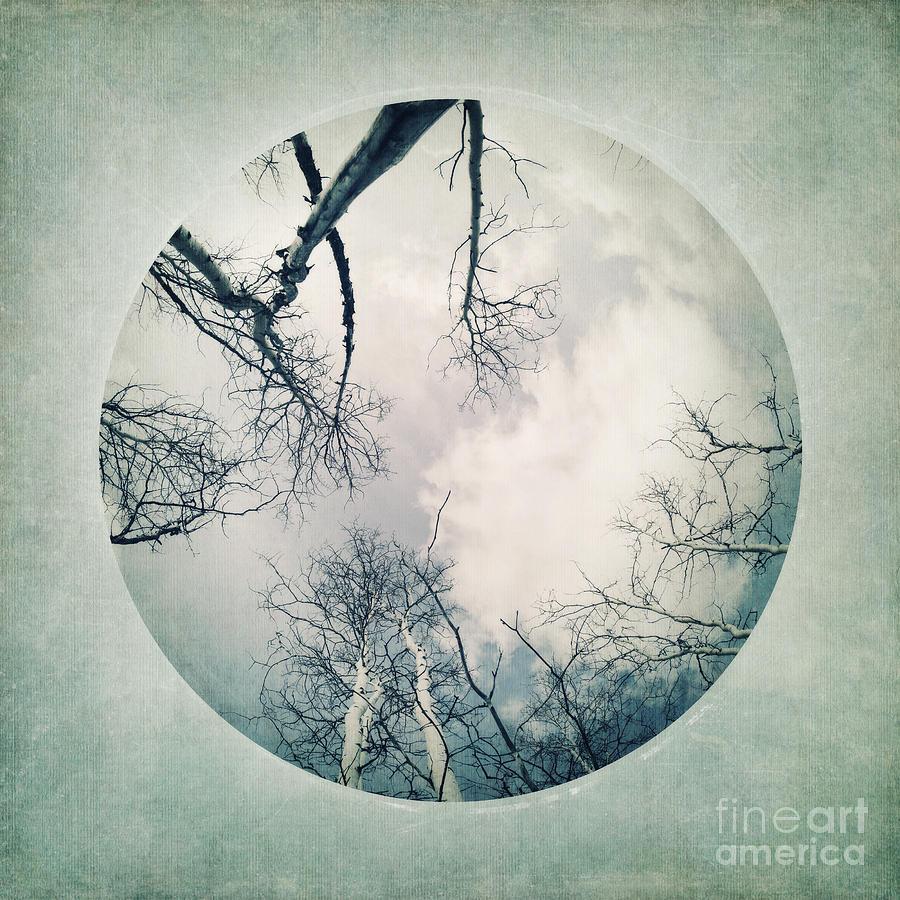 Vignette Photograph - round treetops I by Priska Wettstein