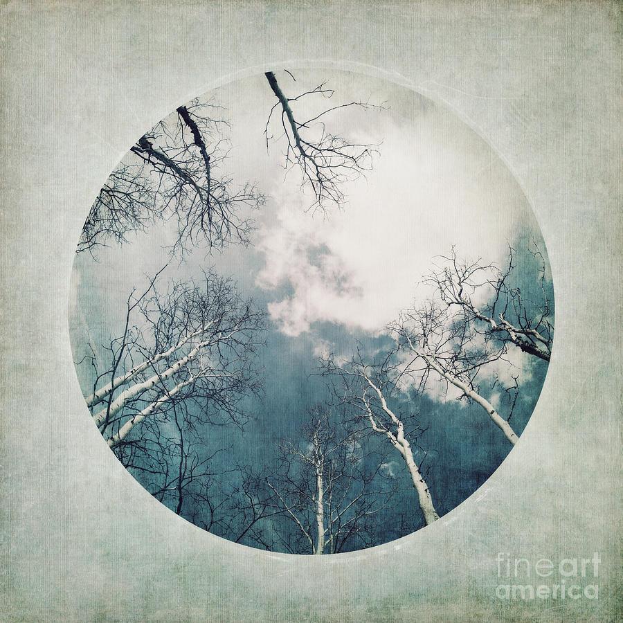 Vignette Photograph - round treetops III by Priska Wettstein