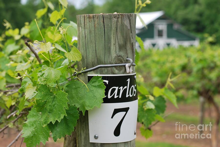 Carlos Photograph - Row 7 Carlos  by Gayle Melges