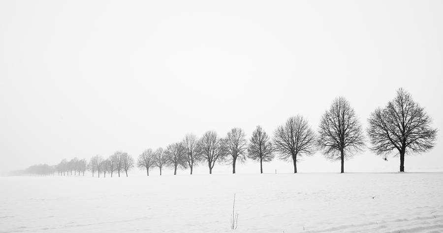 Row of bare trees in minimal winter landscape photograph for Minimal art landscape