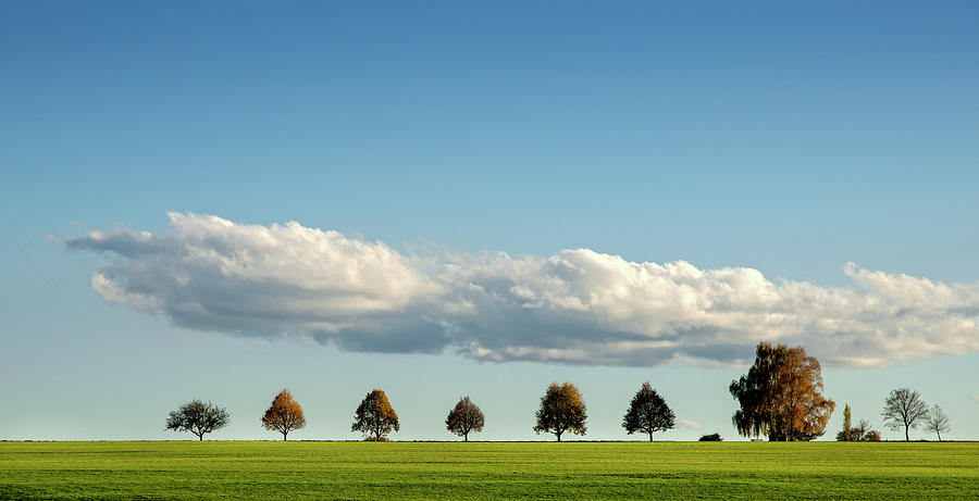 Row Of Trees Photograph by Thomas Winz