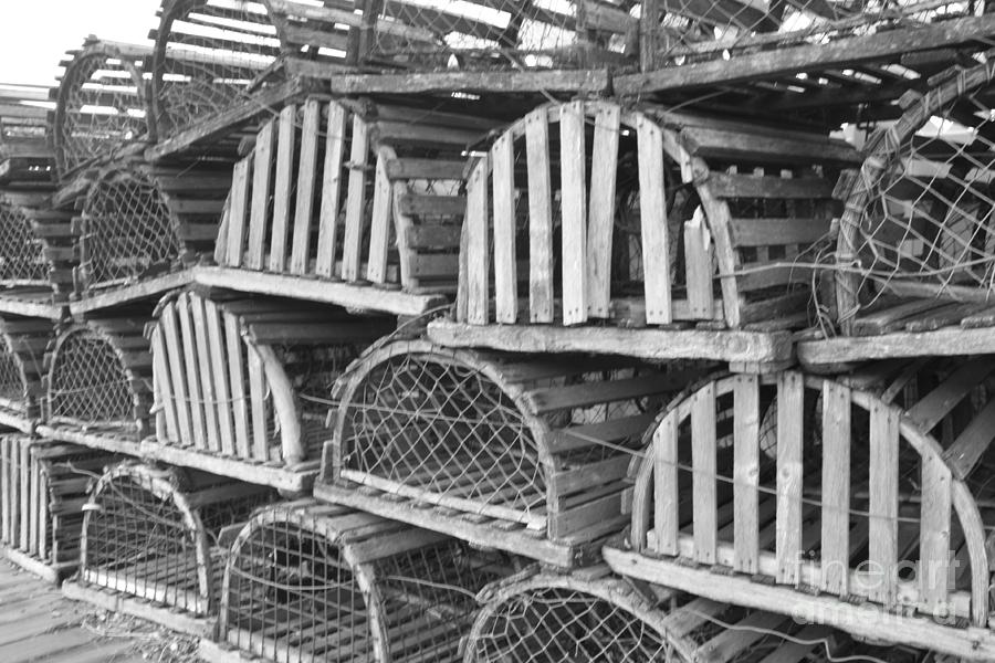 Telfer Photograph - Rows Of Old And Abandoned Lobster Traps by John Telfer