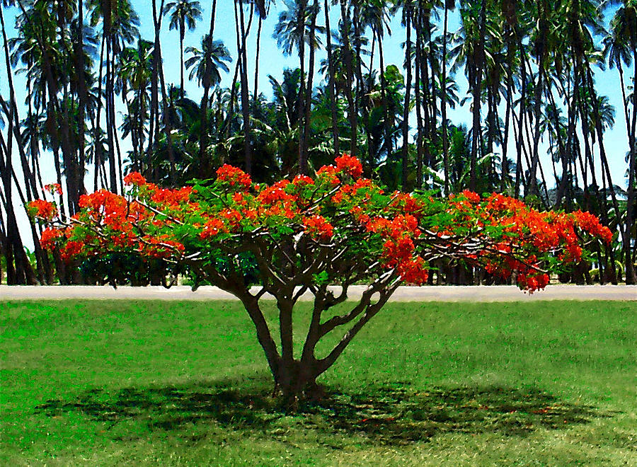 Coconut Palm Trees Photograph - Royal Grove by James Temple