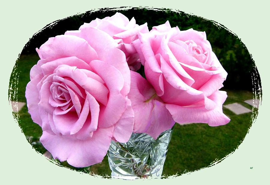 Pink Photograph - Royal Kate Roses by Will Borden