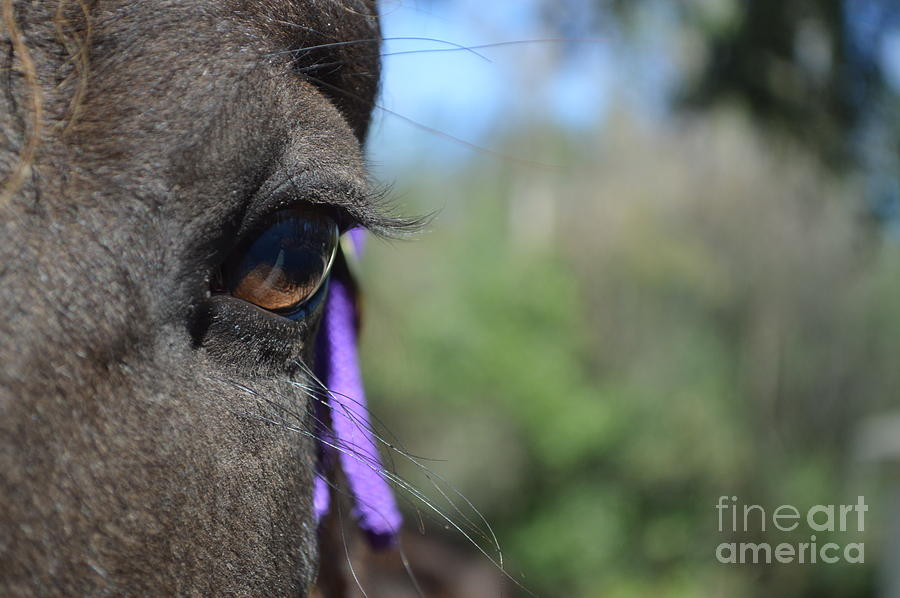 Eyelashes Photograph - Royal Lashes by Catherine Peterson