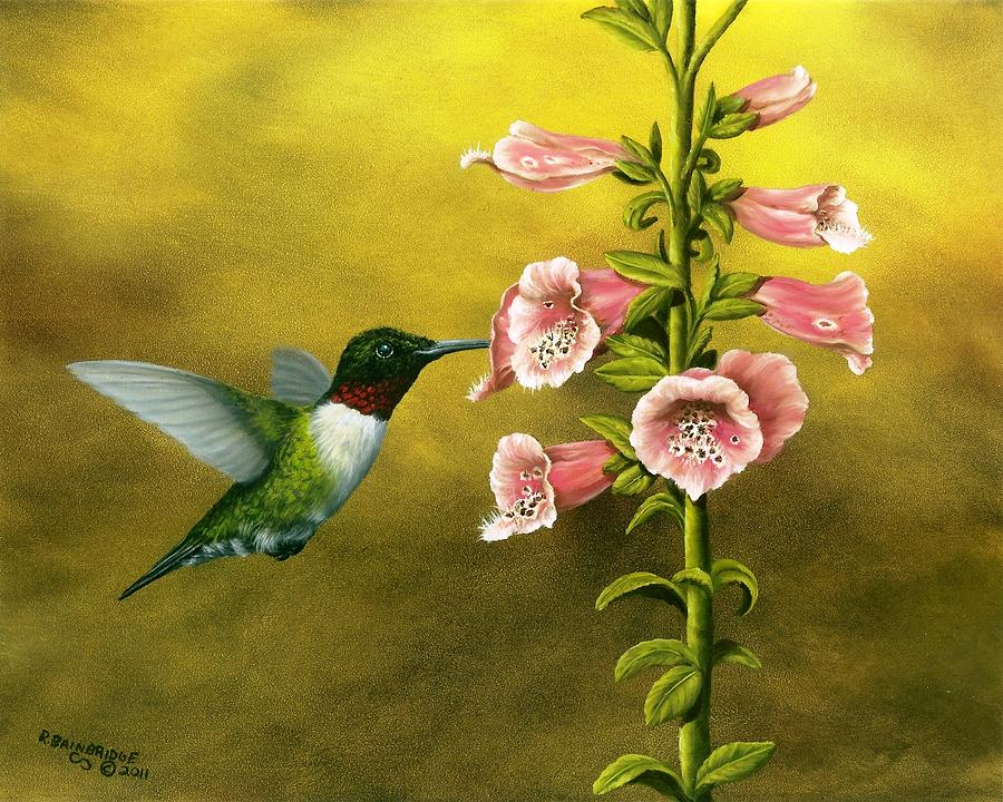 Ruby Throated Hummingbird And Foxglove Painting by Rick ...