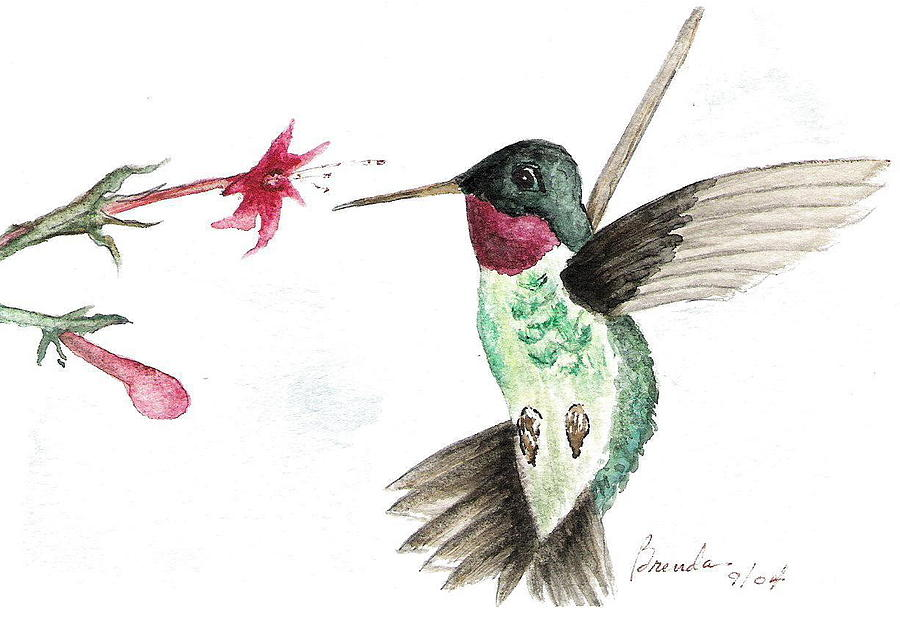 Watercolor Painting - Ruby Throated Hummingbird by Brenda Ruark