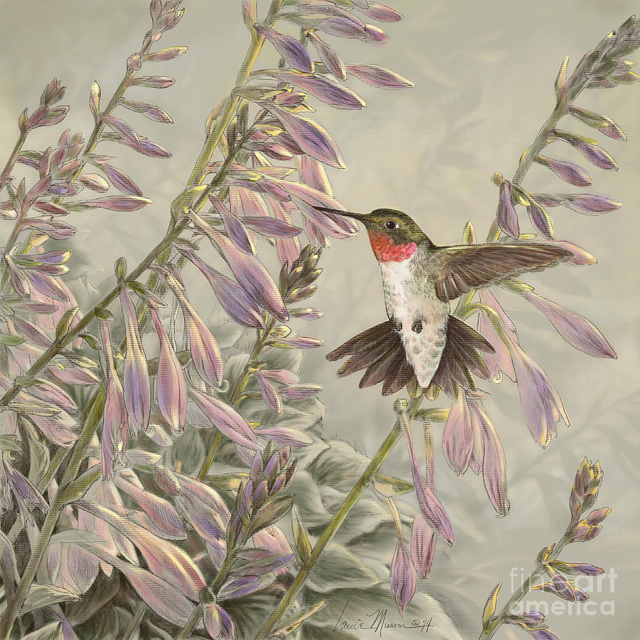 Birds Drawing - Ruby-throated Hummingbird by Laurie Musser