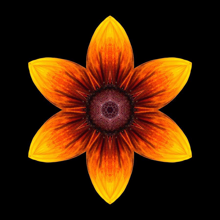 Flower Photograph - Rudbeckia I Flower Mandala by David J Bookbinder