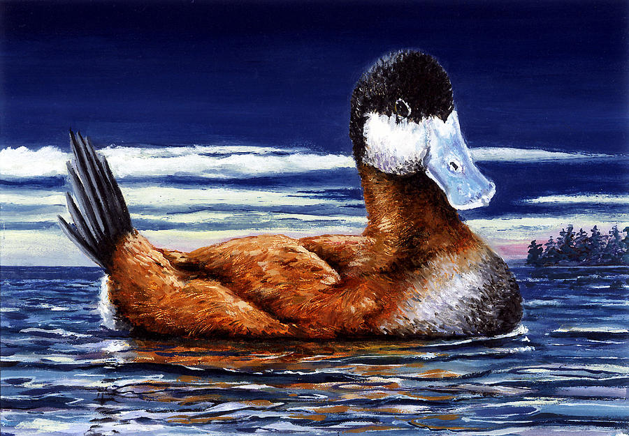 Ruddy Duck by Paul Gardner