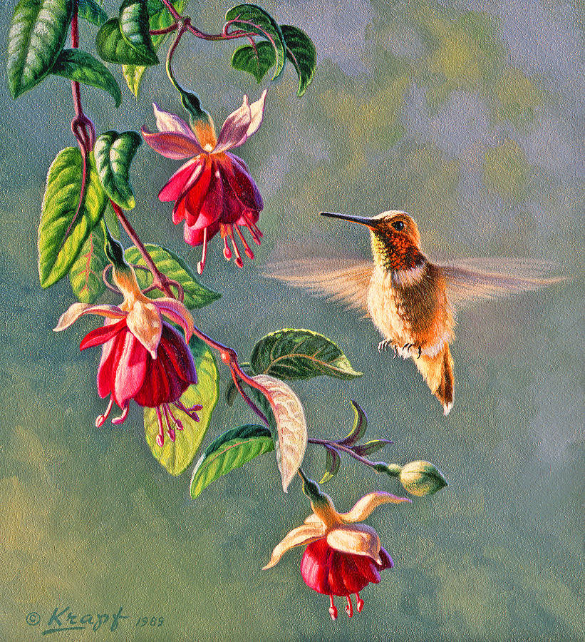 Wildlife Painting - Rufous And Fuschia by Paul Krapf