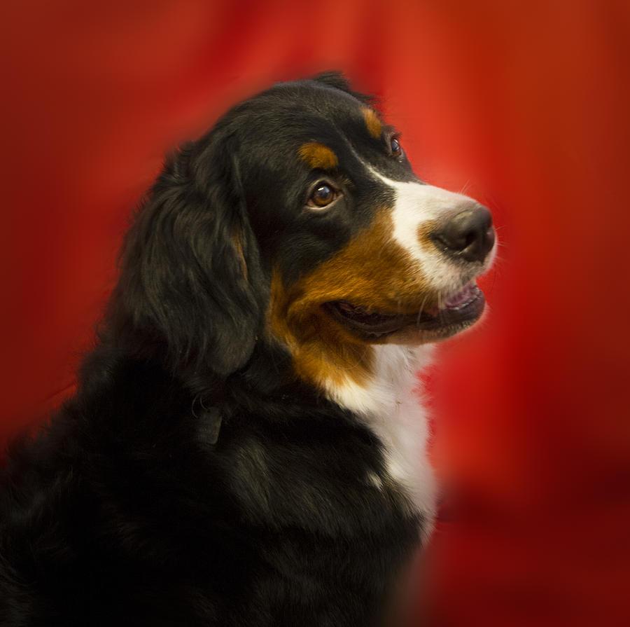 Dog Photograph - Rumor Has It by Jean Noren