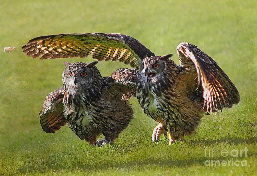 Owls Photograph - Run For The Bread by Wobblymol Davis
