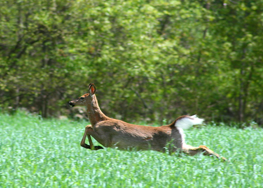 Deer Photograph - Run Forest Run by Neal Eslinger