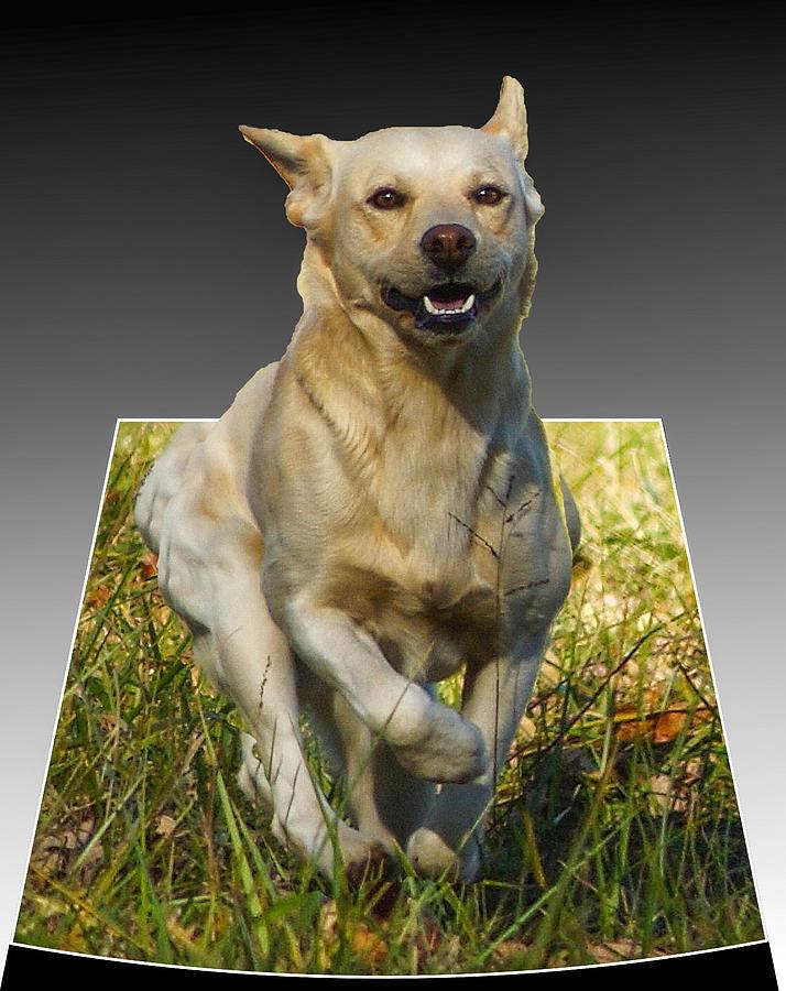 Puppy Digital Art - Run Puppy Run by B Wayne Mullins