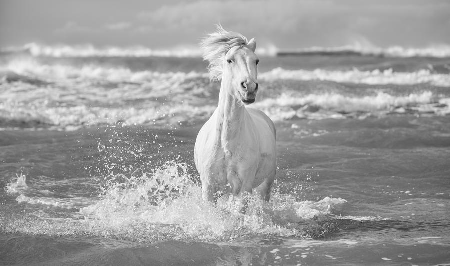 Horse Photograph - Run White Horses I by Tim Booth