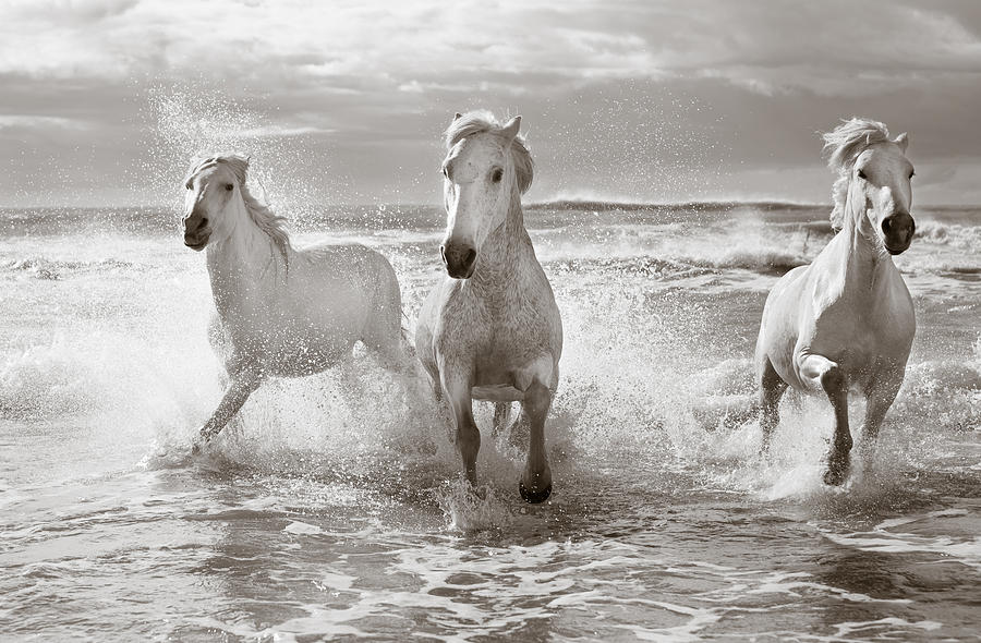 Horse Photograph - Run White Horses II by Tim Booth