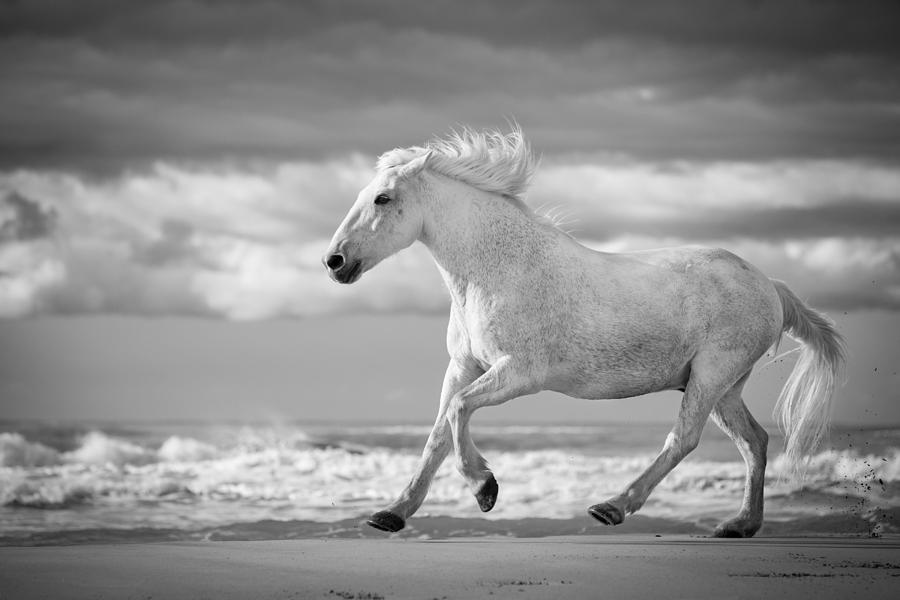 Horse photograph run white horses v by tim booth