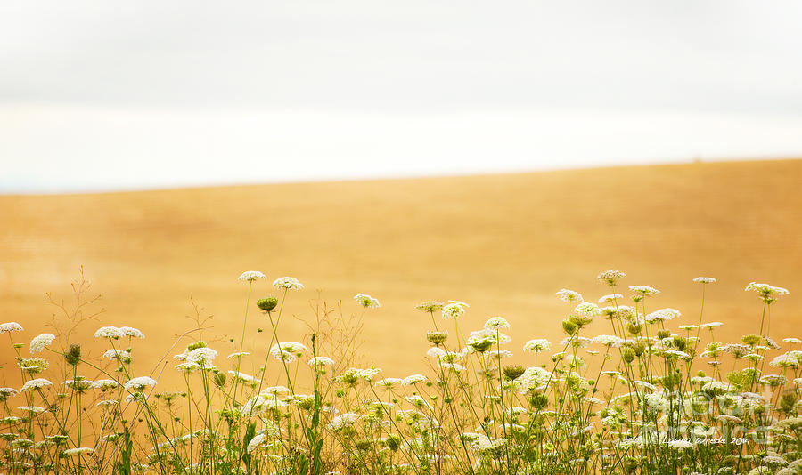Grassy Hill Photograph - Run With Me Through A Field Of Wild Flowers by Artist and Photographer Laura Wrede