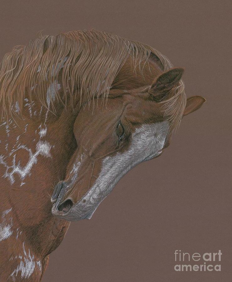 Horse Drawing - Rune by Laura Klassen