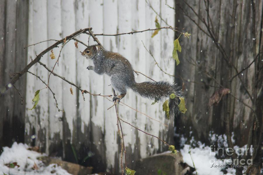 Squirrels Photograph - Running Away  by Lorelle Gromus