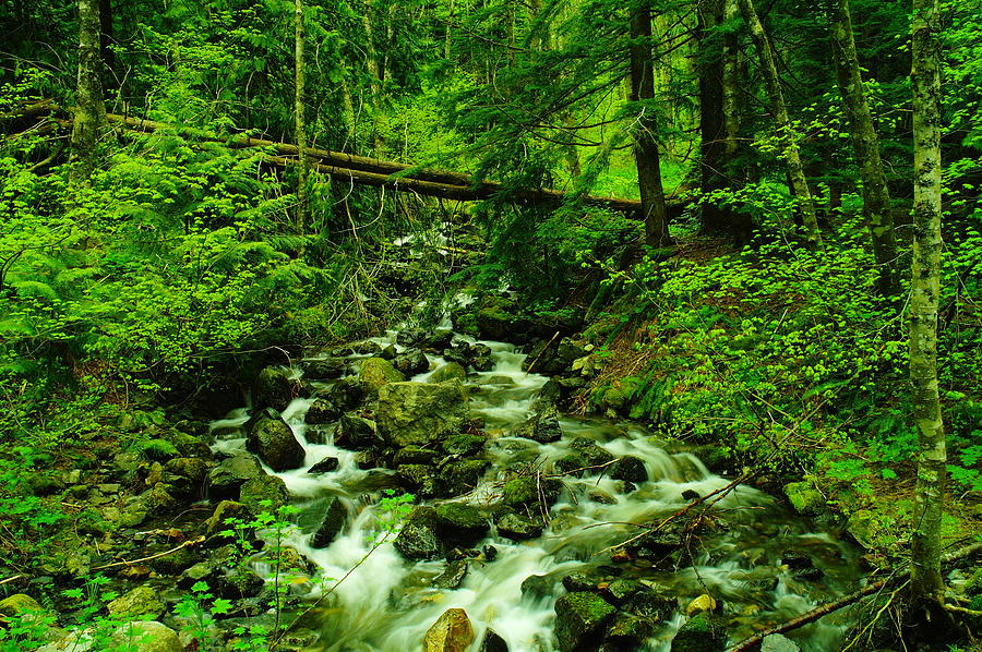 Rivers Photograph - Running Down The Mountain by Jeff Swan