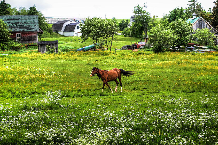 Horse Photograph - Running Free by Gary Smith