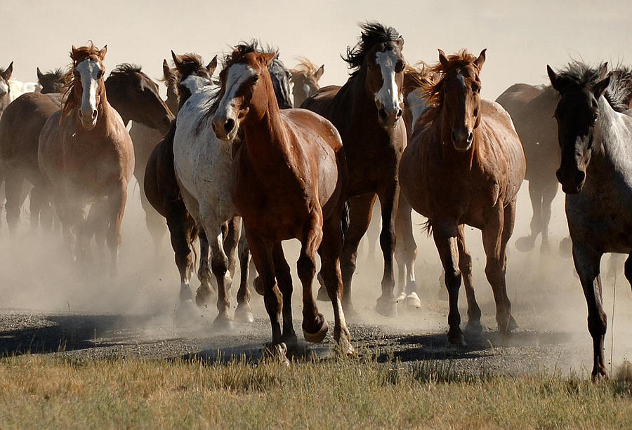 Horses Photograph - Running Free by Lee Raine